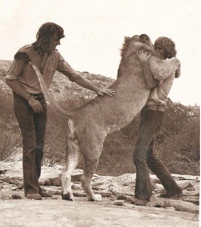 lion lovr